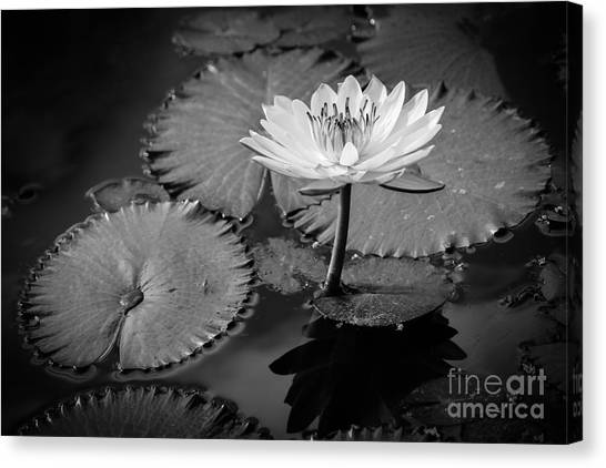 St. Lucie County Canvas Print - Waterlily Elegance 2 by Liesl Walsh