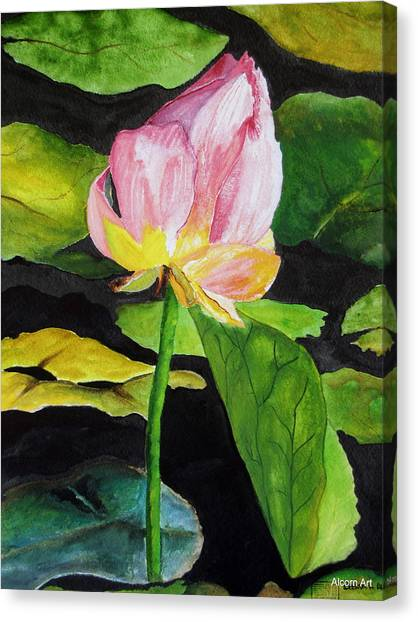 Waterlily Watercolor Canvas Print by Brenda Alcorn
