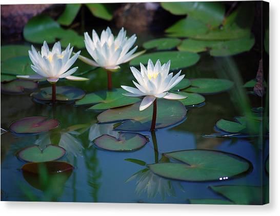 Waterlilys Canvas Print