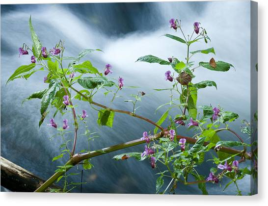 Andy Bloom Canvas Print - Waterscapes - Lilac Blossom by Andy-Kim Moeller