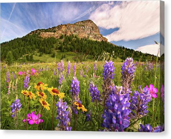 Waterton Wildflowers Canvas Print