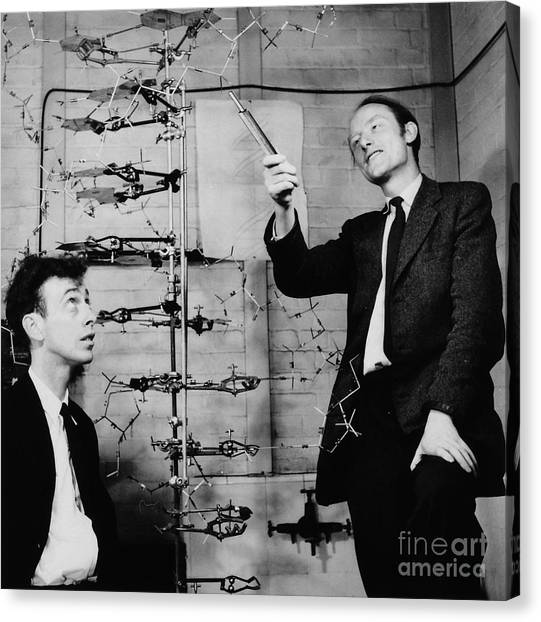 Genetics Canvas Print - Watson And Crick by A Barrington Brown and Photo Researchers