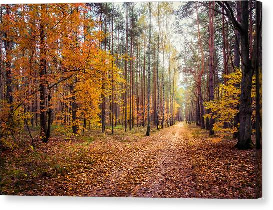 Way Of Light Canvas Print