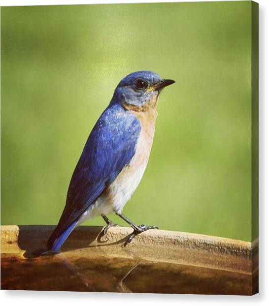Songbirds Canvas Print - We Are Thrilled To Have Eastern by Heidi Hermes