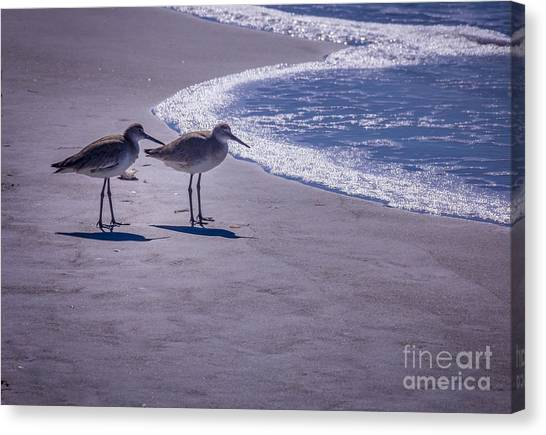 Sandpipers Canvas Print - We Stand Together by Marvin Spates