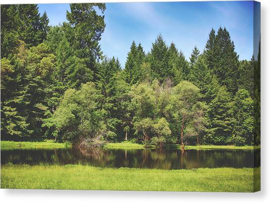 Redwood Forest Canvas Print - We Walked Through The Grass by Laurie Search