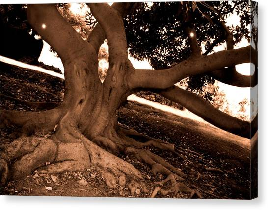 We Would -- Screaming Trees Canvas Print