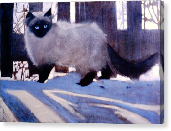 Himalayan Cats Canvas Print - Weasel Out For A Walk by David Zimmerman