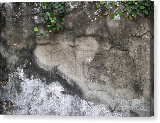 Weathered Broken Concrete Wall With Vines Canvas Print