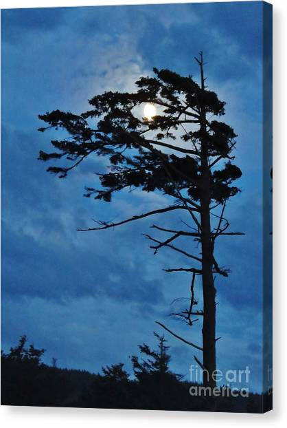 Weathered Moon Tree Canvas Print