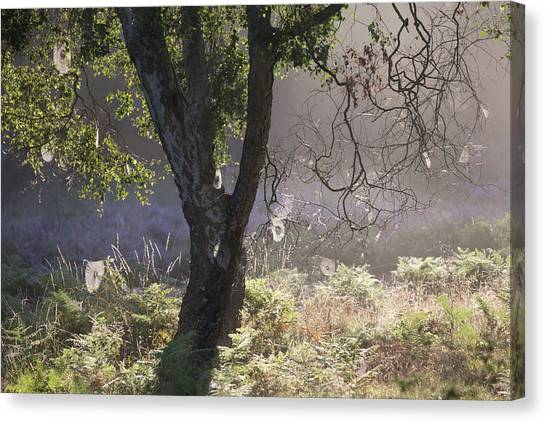 Sherwood Forest Canvas Print - Webs by Chris Dale