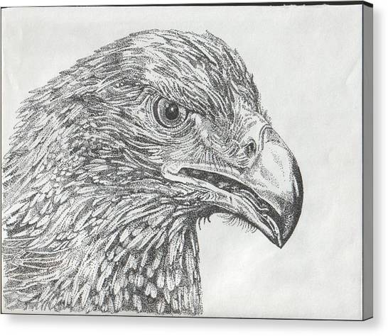 Wedgetail Eagle Canvas Print by Leonie Bell