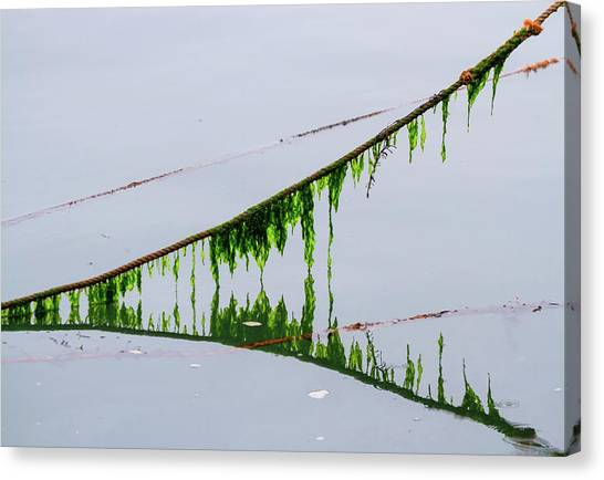 Weed Line Canvas Print