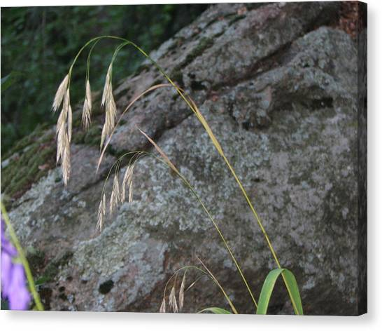 Weeping Grass Canvas Print