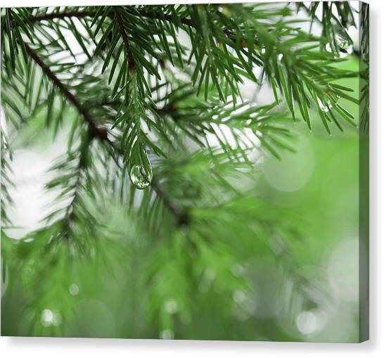 Weeping Pine 2 Canvas Print