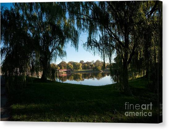 Weeping Willows Canvas Print
