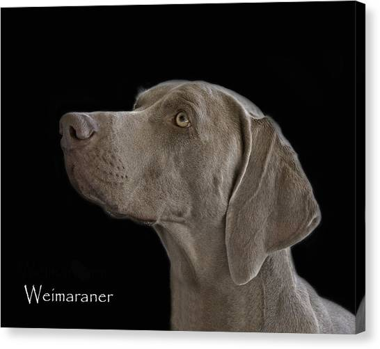 Weimaraners Canvas Print - Weimaraner by Larry Linton