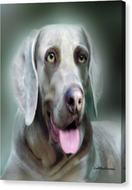 Weimaraner Rusty  Portrait  Canvas Print