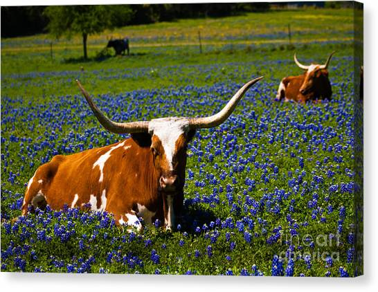 Welcome To Texas Canvas Print by John Stanisich
