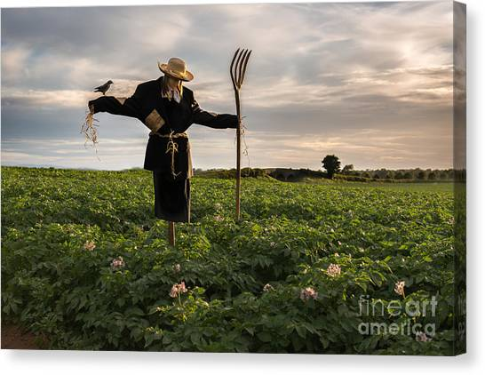 Scarecrows Canvas Print - Well You Don't Scare Me by Amanda Elwell