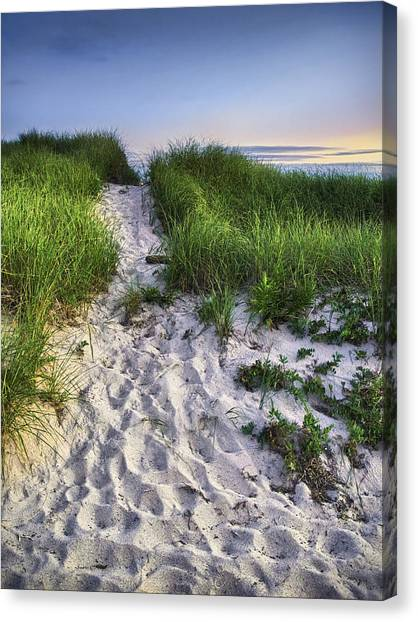 Seagrass Canvas Print - Wellfleet Beach Path by Tammy Wetzel