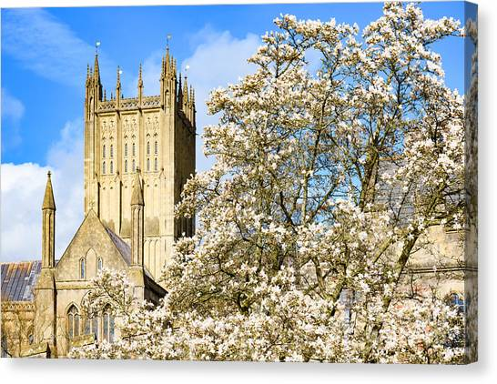 Wells Cathedral And Spring Blossom Canvas Print