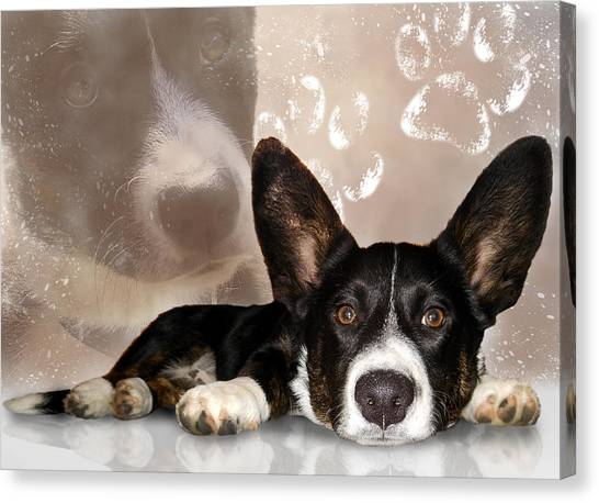 Welsh Corgi Cardigan Canvas Print