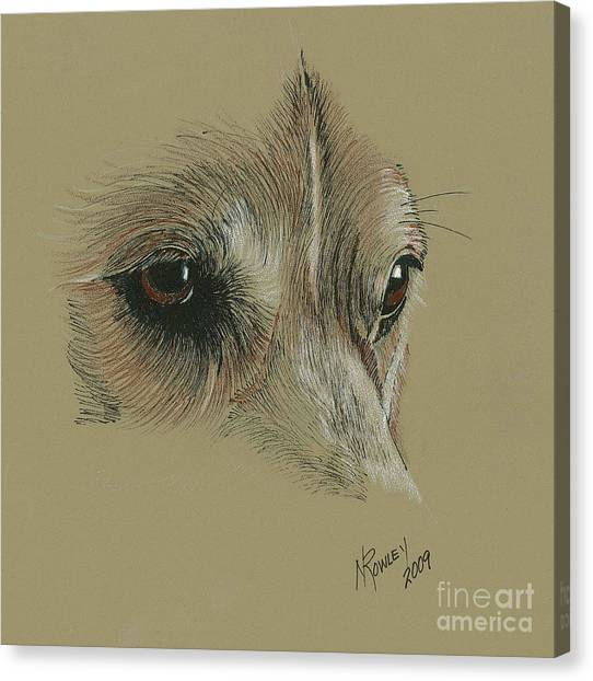 Welsh Corgi Eyes Canvas Print by Norma Rowley