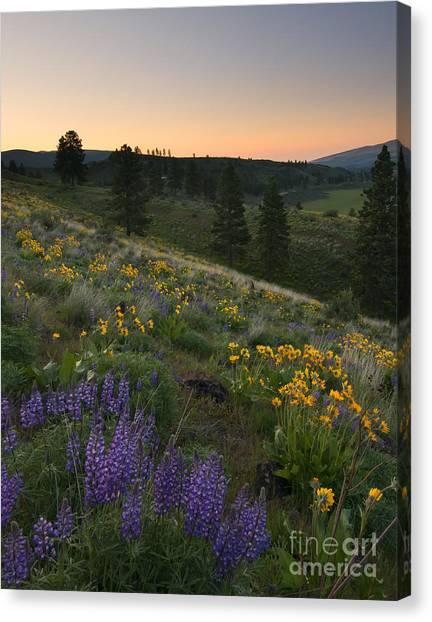 Desert Sunrises Canvas Print - Wenas Spring Sunrise by Mike Dawson