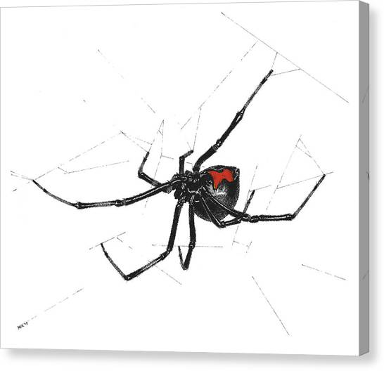 Western Black Widow - Color Canvas Print