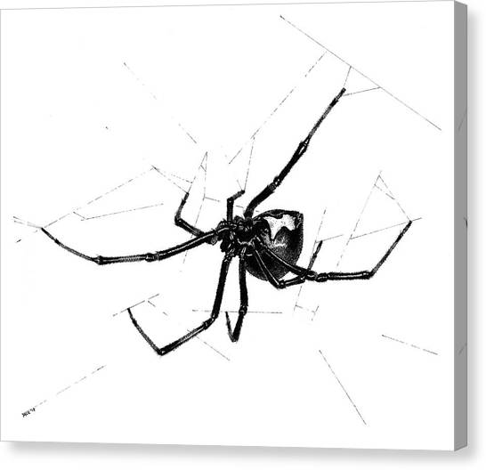 Western Black Widow Canvas Print