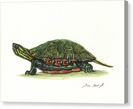 Tortoises Canvas Print - Western Painted Tortoise by Juan Bosco