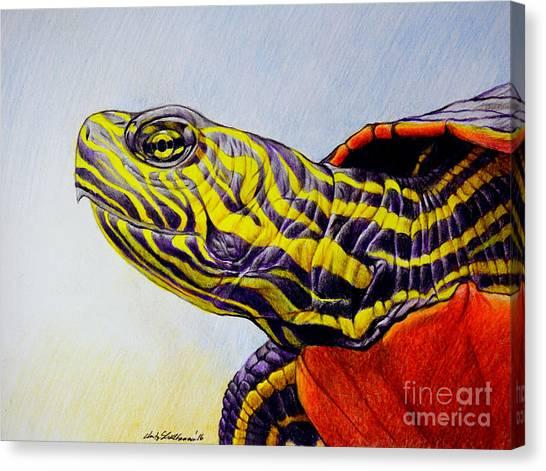 Western Painted Turtle Canvas Print