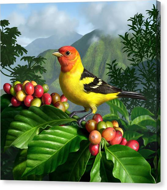 Coffee Beans Canvas Print - Western Tanager by Jerry LoFaro