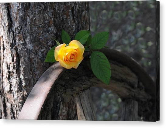 Western Yellow Rose II Canvas Print