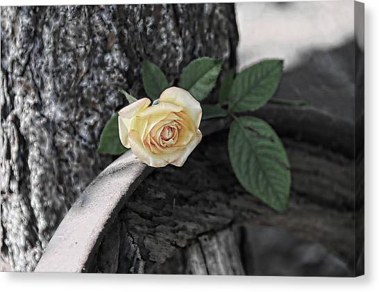 Western Yellow Rose Iv Canvas Print