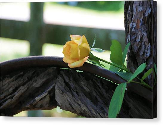 Western Yellow Rose Vii Canvas Print