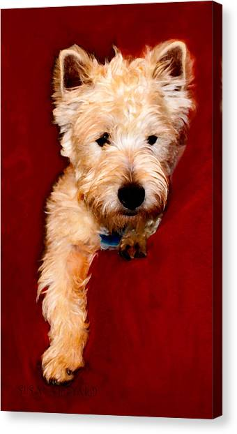 Westie Boy Canvas Print