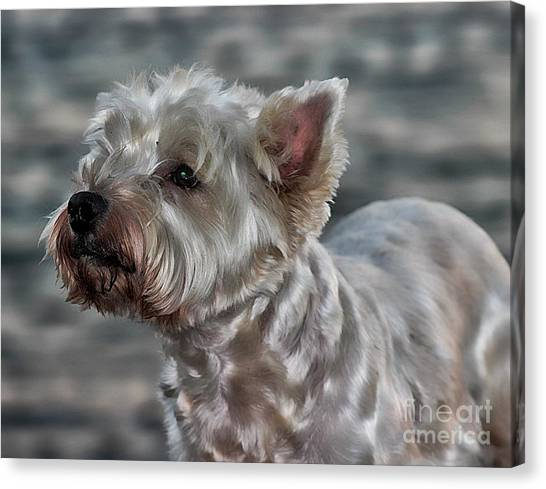 Westie Love Canvas Print