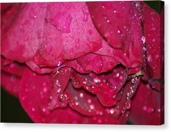 Wet Rose Canvas Print by Heather Green
