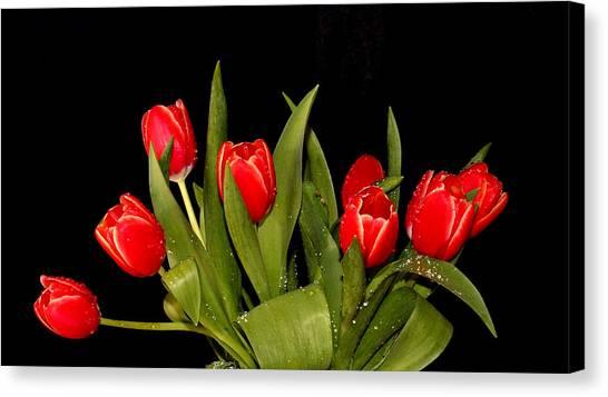 Wet Tulips Canvas Print