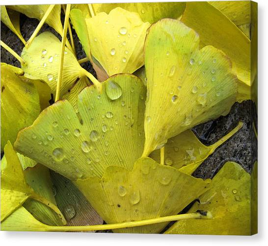 Wet Yellow Leaves 2 Wc  Canvas Print by Lyle Crump