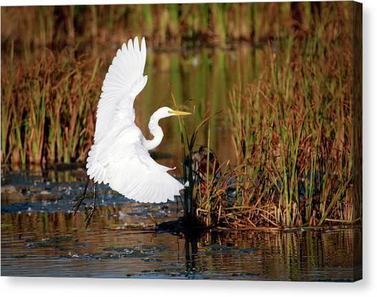Wetland Landing Canvas Print