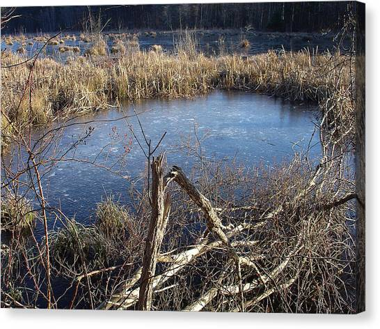 Wetland Pond Canvas Print