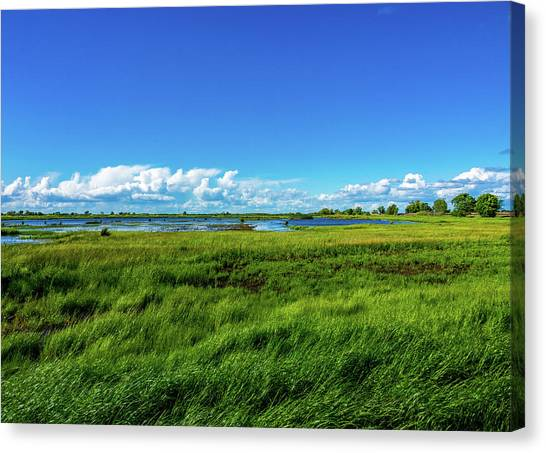 Wetlands On A Windy Spring Day Canvas Print