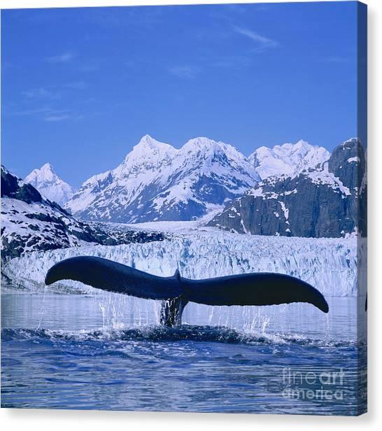 Margerie Glacier Canvas Print - Whale Fluke by John Hyde - Printscapes