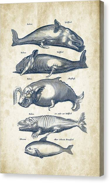 Whales Canvas Print - Whale Historiae Naturalis 08 - 1657 - 41 by Aged Pixel
