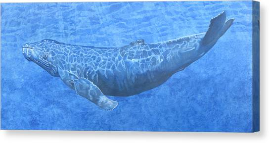 Whale In Surface Light Canvas Print