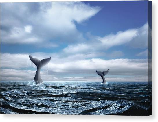 Orcas Canvas Print - Whale Of A Tail by Tom Mc Nemar