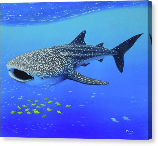 Whale Shark Canvas Print by James Zeger